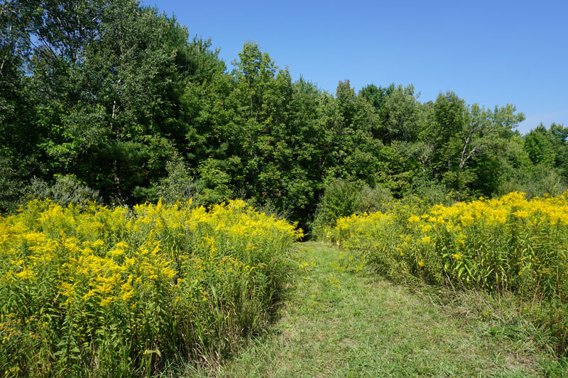 Two-Rivers-State-Park-Waverly-NY-Trail-Field