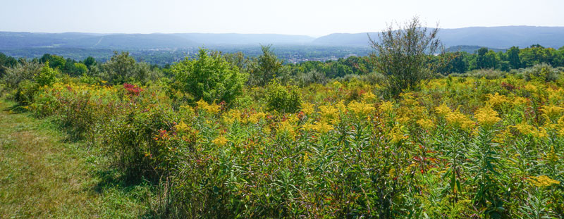 Two-Rivers-State-Park-Waverly-NY-Trail-Open-Field