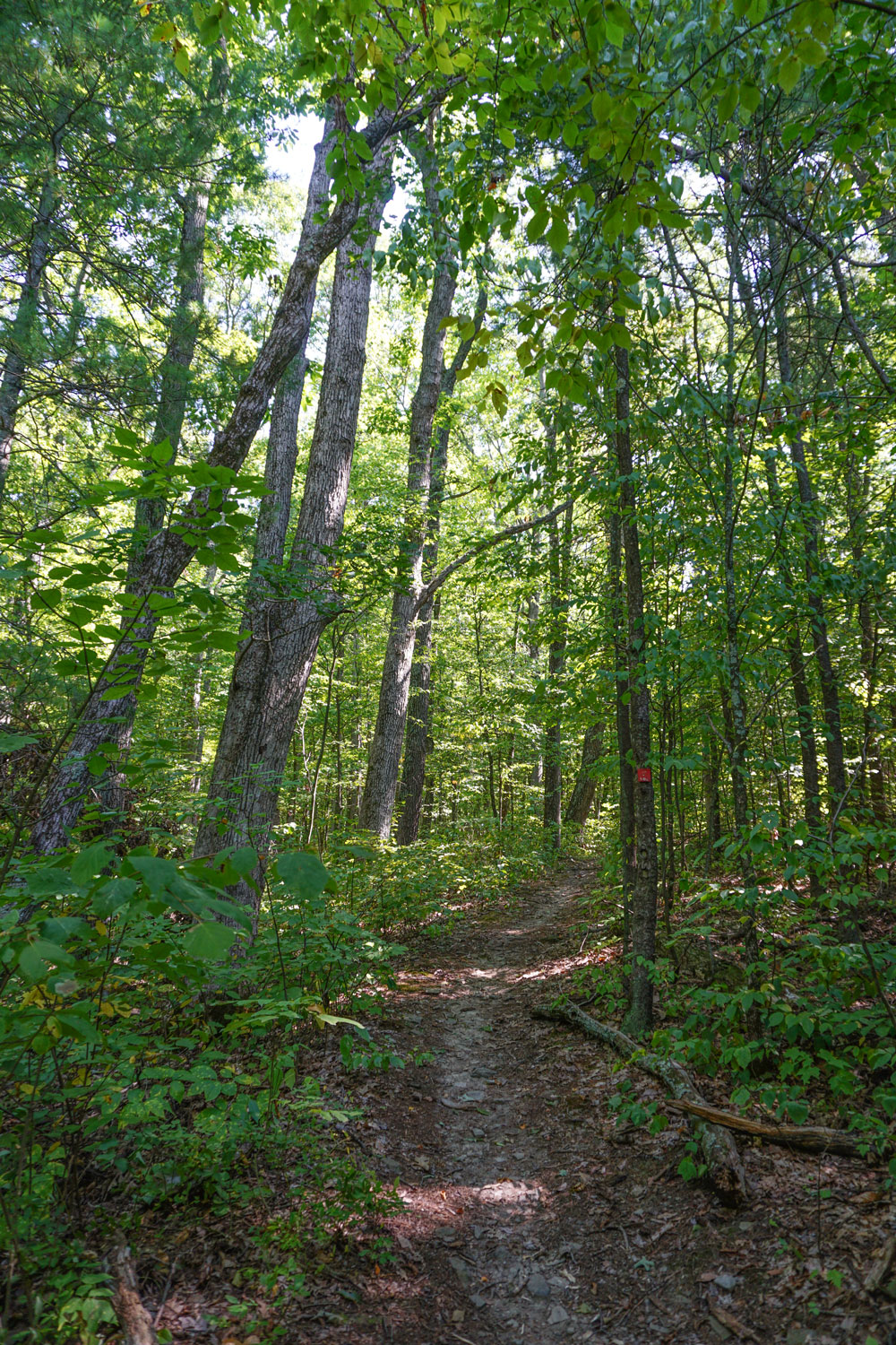 Two-Rivers-State-Park-Waverly-NY-Trail