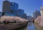 Cherry blossoms (Sakura) at the Osaki Gate City, Meguro River