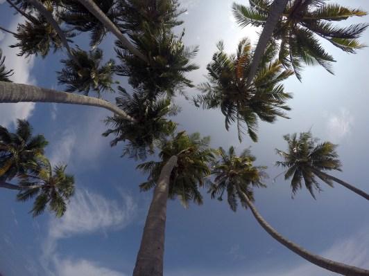 palmerunderifrån