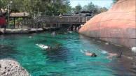 typhoon Shark Reef1