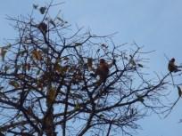 tree monkey 5