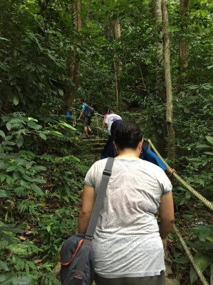 The rainforest trail