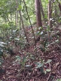 Natural rainforest