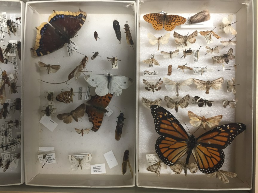 October 5th Visit to the Insect Collection