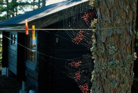 Nina Katchadourian – Uninvited Collaborations with Nature
