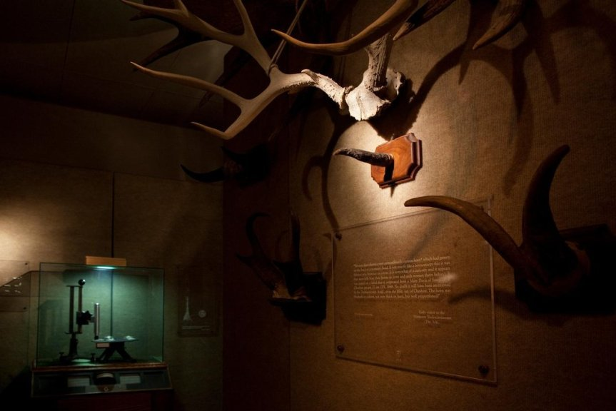 collection_of_horns_with_pdpsr_at_the_museum_of_jurassic_technology_-credit_mjt_1000-jpg__1072x0_q85_upscale