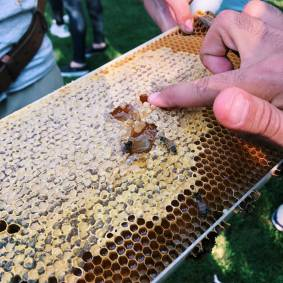 We got to taste honey straight off the frame!