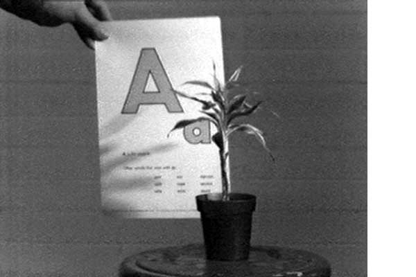 1342729147_2-Teaching-a-Plant-the-Alphabet-(Baldessari-1972)_600