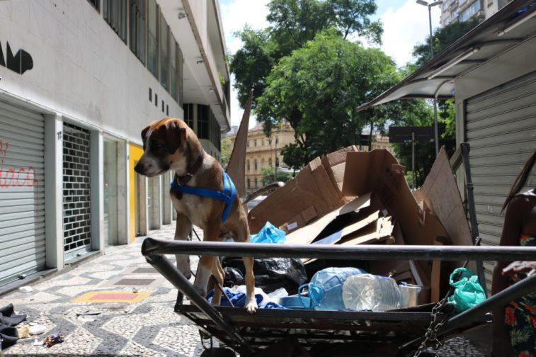 cachorro-moradores-de-rua-e-seus-caes-4