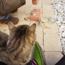 Foto einer Katze, die beobachtet wie Kastanien zwischen zwei Ziegeln zerbröselt werden