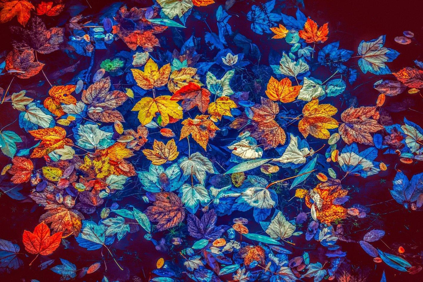 Autumn or Fall