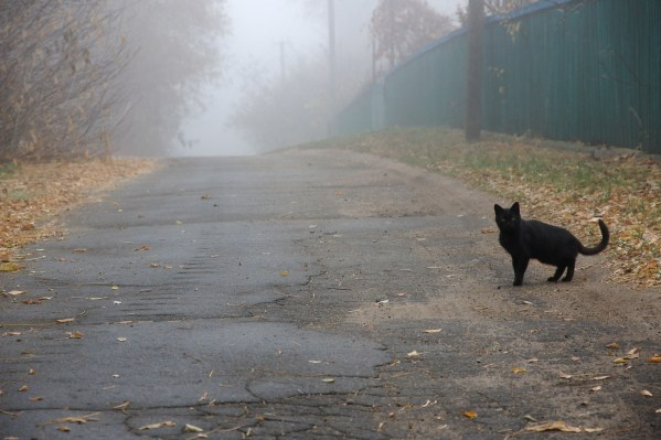 black cat crossing path