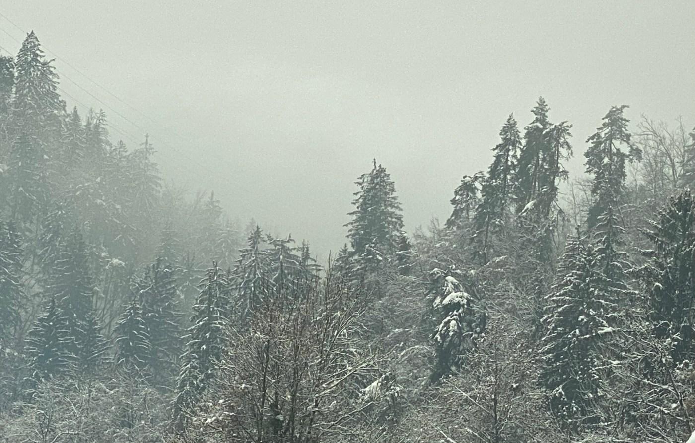 Snow trees January