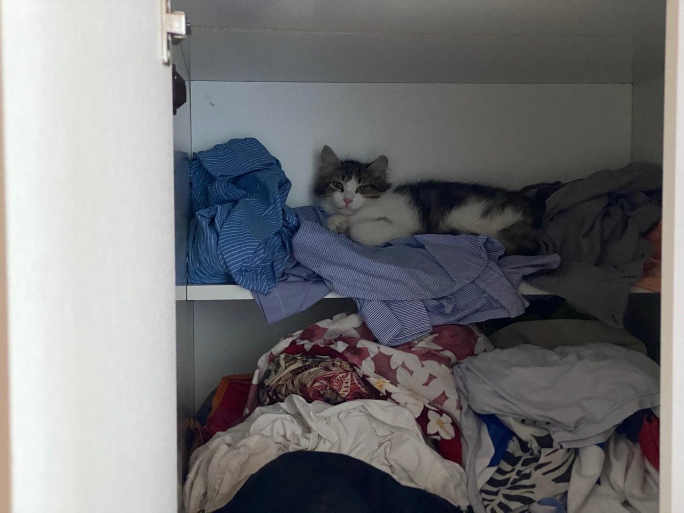 cat in a cupboard