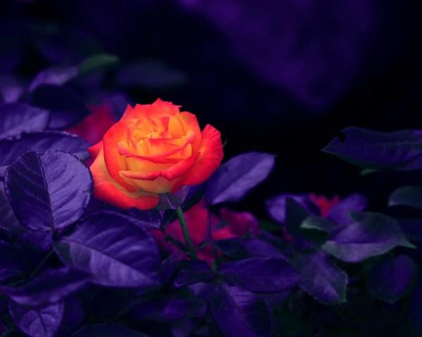 night-blooming flowers