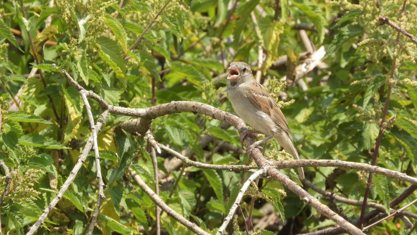 bird singing in trees