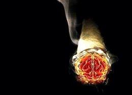 cigarette_brain