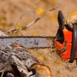 Советы по выбору бензопилы для работ в саду