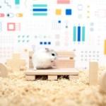 Panasonic создал умный дом для хомяка