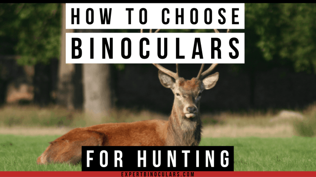 how to choose binoculars for hunting