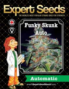 Cheese Auto Bulk a.k.a Funky Skunk