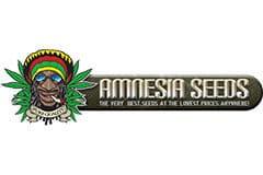 Amnesia Seeds