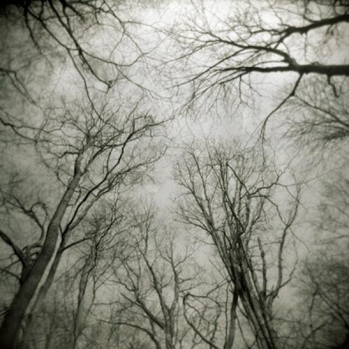Trees above, Beaver Lake, Baldwinsville, NY.
