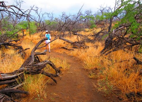 S95 - Petroglyph Park Path