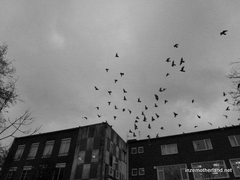 It was very pigeony!