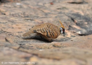 King's Canyon birdlife (Photo: Jan Haenraets, 2012).