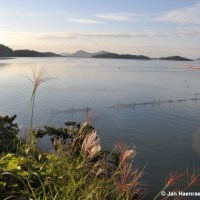 Island Hopping on the Shinan Islands, South Korea (Full Article)