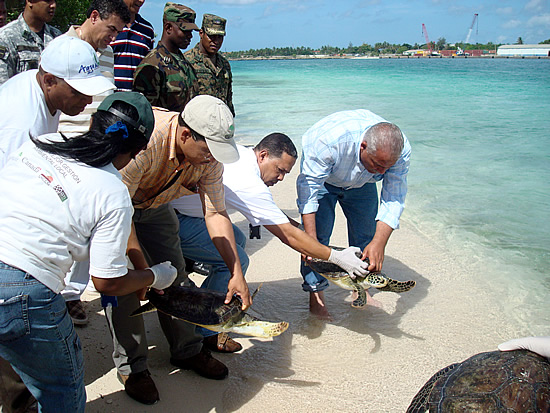 Liberación Tortugas Carey