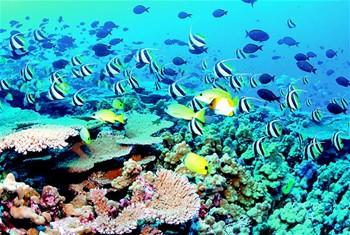 Arrecifes Caribeños