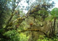 Cloudforest Day Tours