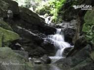img 5903 300x225 Rainforest Eco Tours