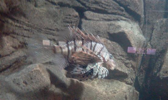 ikan berduri