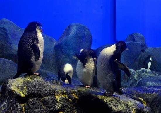 penguin ini boleh diberi makan oleh pengunjung dengan tambahan caj