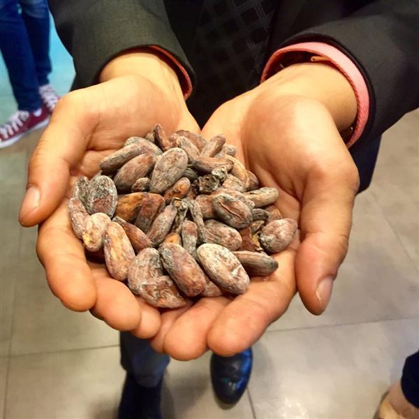 biji koko mempunyai kualiti berlainan di antara negara-negara pengeluar