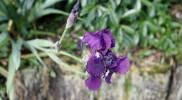 bnb-rotorua-flower-purple