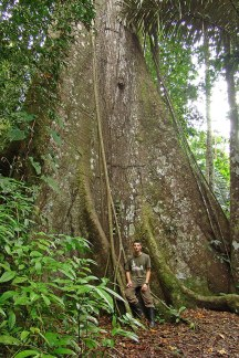 Giant tree of the Peruvian Amazon