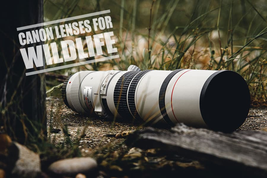 Best Canon Lenses for Wildlife Photography- Ultimate Guide