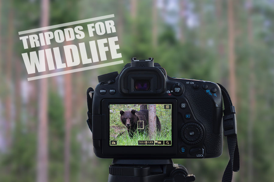 Best Tripod for Wildlife Photography - Our 5 Top Picks