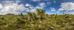 Indian Ocean Drive, Grass Trees