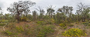 Perth, Kings Park, Bushland