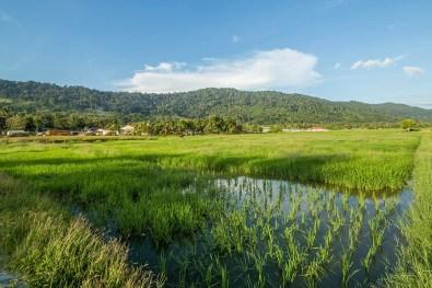 Langkawi Countryside