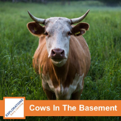 Cows In The Basement