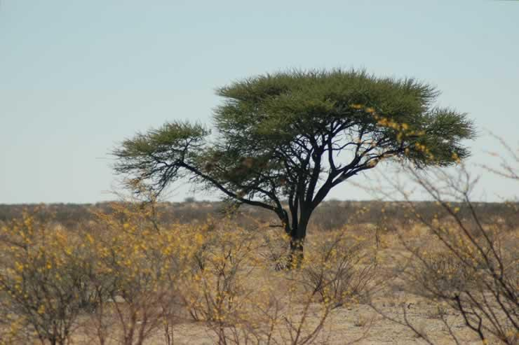 explorationvacation - 09-12_03-27-50 tree w sweet thorn2