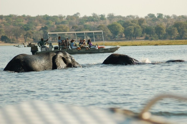 09-25_09-07-57 elephants in water w boats - ExplorationVacation